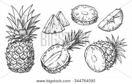 Sketch Of Pineapple. Isolated Hand Drawn Ananas Slices. Citrus Fruit Cut In Half Or Tropical Sliced