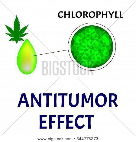 Antitumor Effect Of Marijuana Chlorophyll. Oncology Treatment With Hemp Oil. Marijuana In Medicine.
