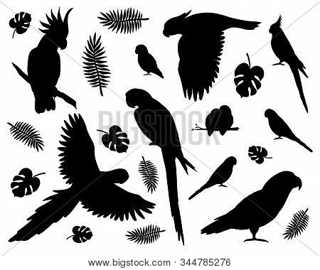 Vector Set Bundle Of Black Different Parrots Silhouette Isolated On White Background