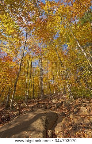 Hiking Uphill Through The Fall Forest In Adirondack State Park In New York