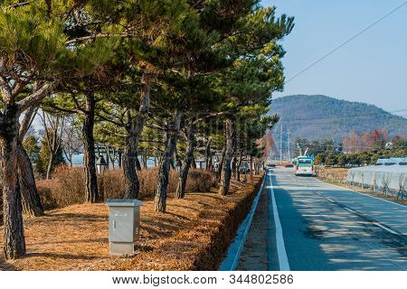 Cheonan, South Korea; January 3, 2020: Row Of Evergreen Trees On Median Next To Two Lane Road With C