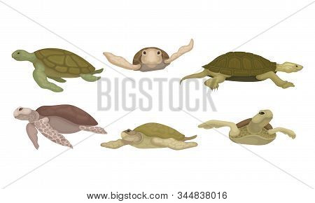 Sea Turtles From Different Perspectives Isolated On White Background Vector Set