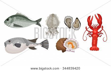Raw And Uncooked Seafood Vector Set. Fresh Marine Products For Market