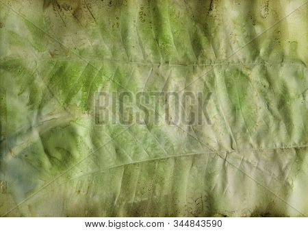 Ecoprint Leaves. Imprint Of A Real Plant On Paper. Vintage Background. Green Color.