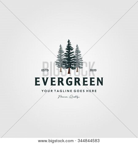 Pine Tree Vintage Logo Evergreen Spruce Fir Vector Emblem Illustration Design
