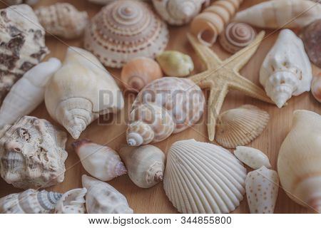 Seashells And Starfish Background. Many Different Seashells Piled Together. Ocean Life. Beautiful Se