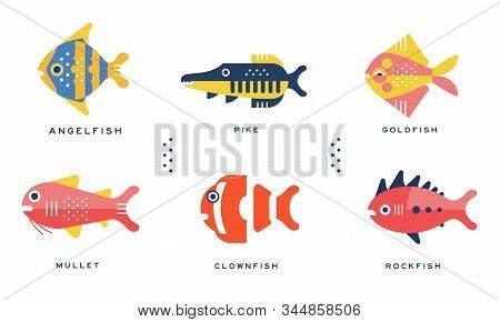 Freshwater And Ocean Fishes Collection, Angelfish, Pike, Goldfish, Mullet, Clownfish, Rockfish Vecto