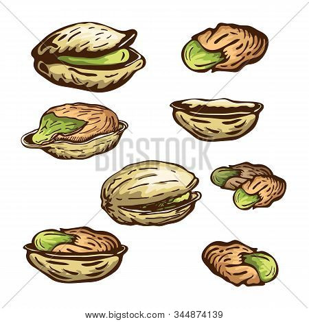 Hand Drawn Pistachio Nuts Set Isolated On White Background. Vector Engraved Nuts Drawing, Open Pista
