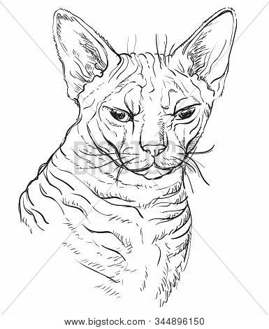 Vector Hand Drawing Portrait Of Angry Sphinx Cat In Black Color Isolated On White Background. Monoch