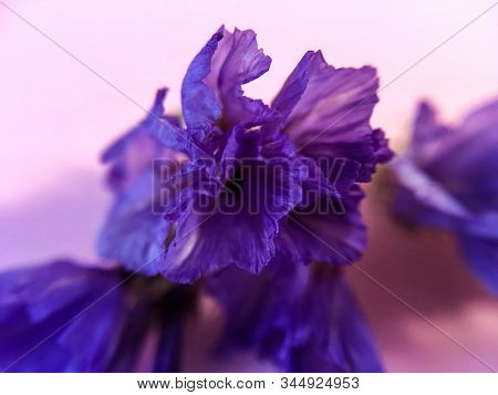 Monophonic Background. The Purple Bud Flower Is Dry. Card.