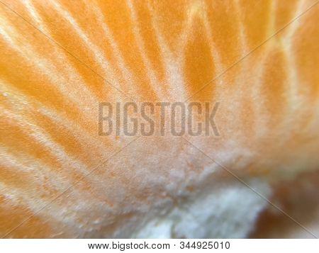 Background Or Texture From Slice Of Orange And Burns. Orange Bright Color. Vitamins. Citrus.