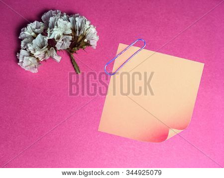 Bright Pink One-tone Background With Small Dry Flower White Color. Holiday. Sticker For Inscriptions
