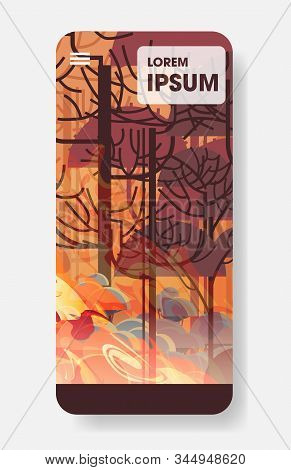 Dangerous Wildfire Australia Bush Fire Development Dry Woods Burning Trees Global Warming Natural Di
