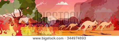 Kangaroo Running From Forest Fires In Australia Animals Dying In Wildfire Bushfire Burning Trees Nat