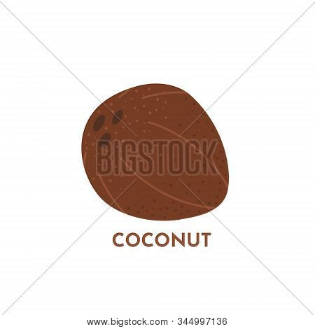 Coconut Fruit Vector Tropical Food Illustration. Textured Whole Coco With Isolated On White Backgrou