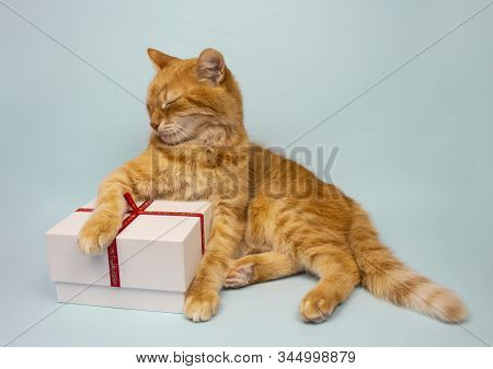 Red Cat Does Not Look At The Camera. Pictures Of Cats, Cat Eyes, Cute Cat, Drawings Of Cats, Drawing
