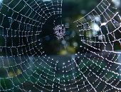 close up of a spider web with sparkling dewdrops poster