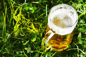 Mug Of Beer In Green Grass