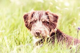 Adorable Brown Dog - Rescue Dog Sitting On A Grass