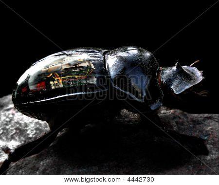 Techno Bug