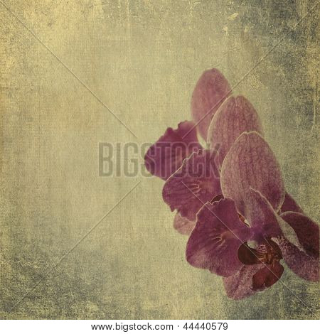 textured old paper background with magenta phalaenopsis orchid poster