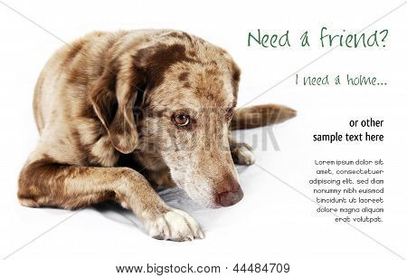 Cute but shy funny looking mutt dog perfect for pet shelter or rescue and adoption programs. poster
