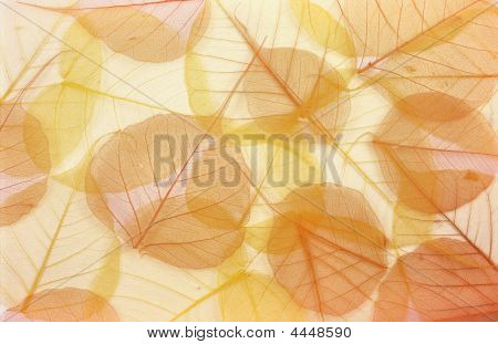 Dry Colored Leaves - Background