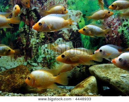 Small Fishes Among Seaweeds