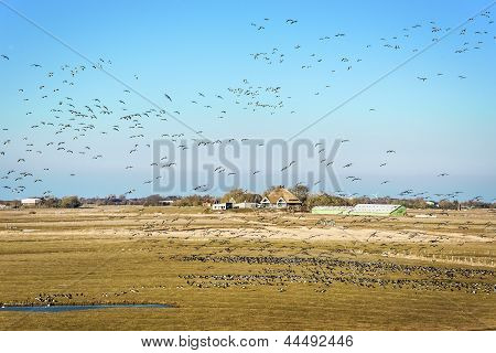 Landscape With House And Birds