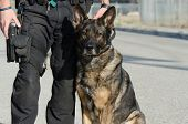A police dog sitting next to his handler. poster