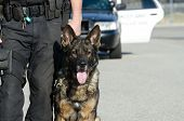 A K9 police officer with his dog. poster