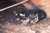 A small Alaskan husky sleeps abandoned in a metal container poster