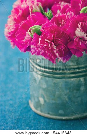 Fuchsia Carnation Flowers