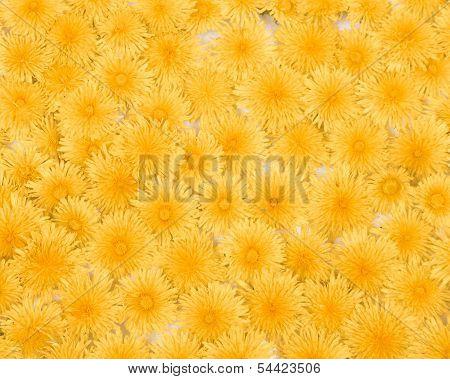 Dandelion Background Pattern