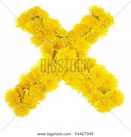 Dandelion Check Marks