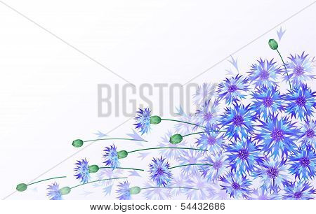 Horizontal vector card with bluebottles