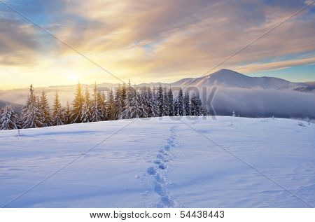 Winter landscape with sunrise in the mountains. The path in the snow. Carpathians, Ukraine, Europe