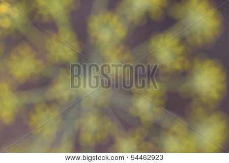 Blurry Abstract Background From Nuture