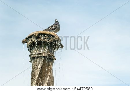 pigeon sitting on the fountain column with blue sky in background poster