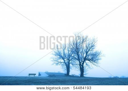 Two trees by the frozen lake on a misty day