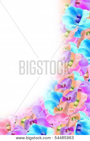 background of colorful flowers poppy