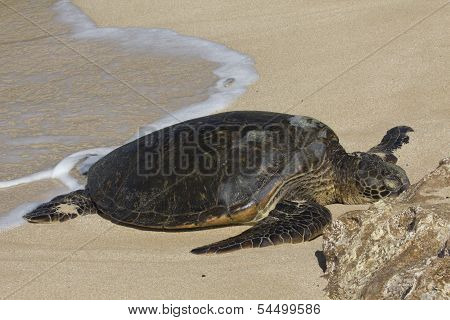 Beached Sea Turtle