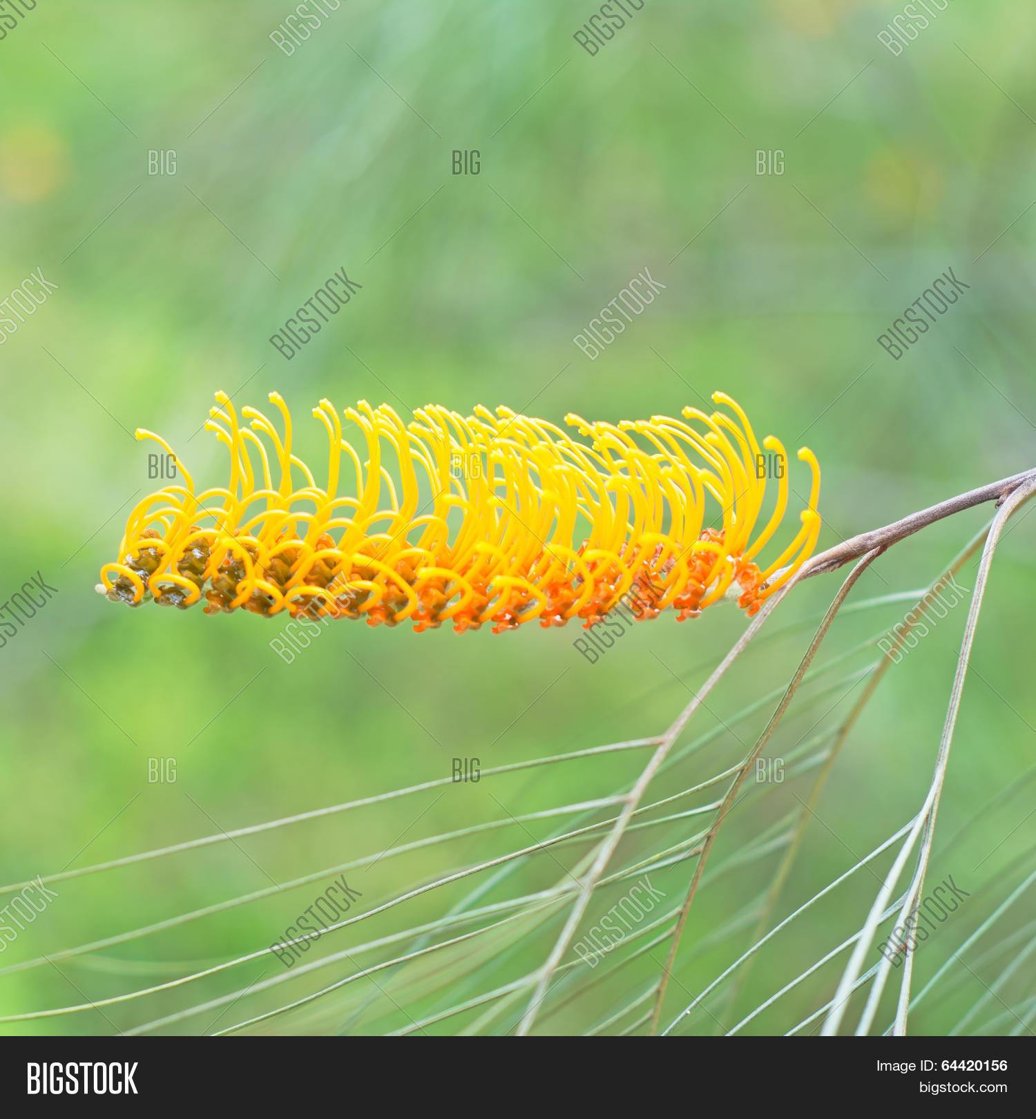 Yellow Flower Image Photo Free Trial Bigstock