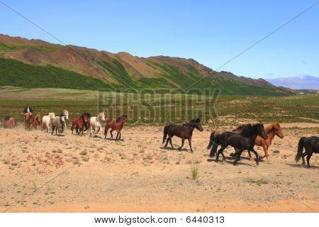 Caballos de Islandia