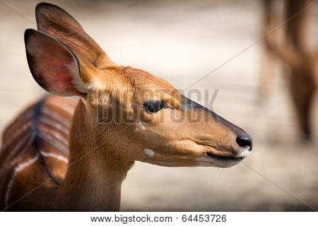 Portrait of bambi