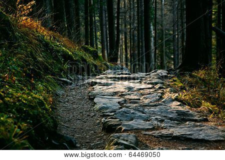 Mountain Landscape With Path And Trees