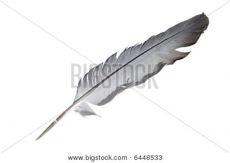 yhe image of a  feather under the white background poster