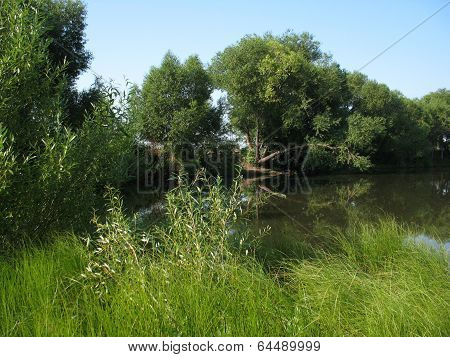 Forest And River