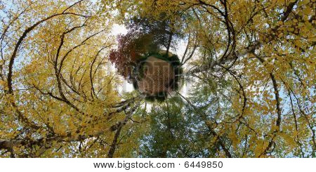 360 degree planet view of a park with a tree around the sky poster
