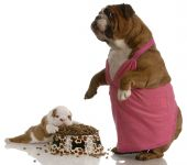 mother bulldog wearing pink dress standing beside puppy with full bowl of dog food poster